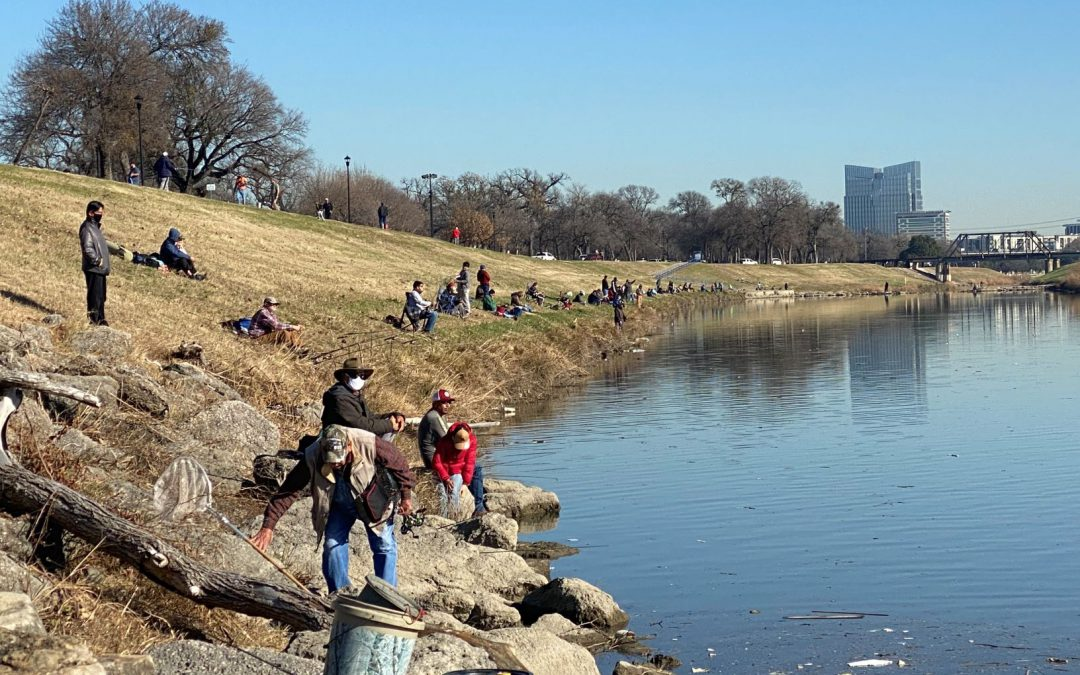 The New Year Brings More Trout to the Trinity River